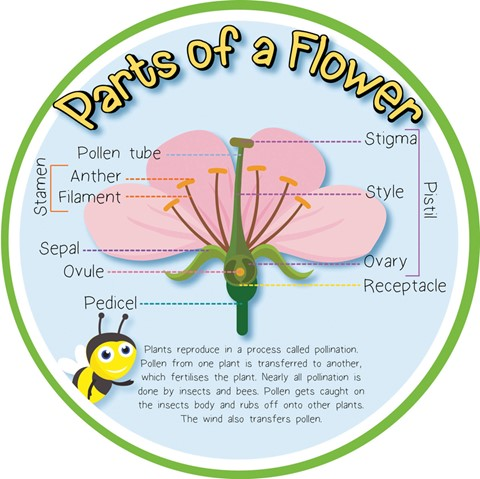 Pollination - Parts of a Flower