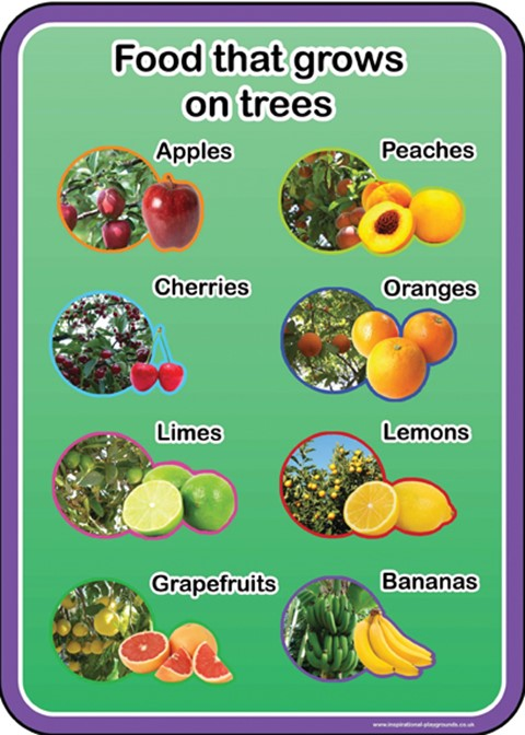 Food that grows on trees